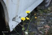 春の訪れ - 花の咲み、花のうた、きらめく地上 ―― photo&poem gallery kanon
