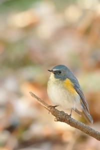 幸せの青い鳥♪ - ちん・ちくりん