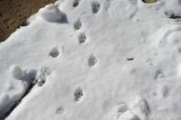 足跡👣 - 動物園へ行こう