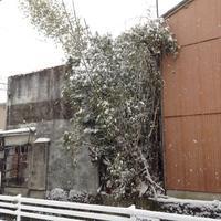 つかの間の雪国気分 - 線路マニアでアコースティックなギタリスト竹内いちろ@三重/四日市