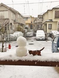 大雪でした! - 横浜の外構エクステリア&ガーデニングのヨコハマリード☆