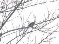 やっぱり阿呆鳥 - Winter PHOTO