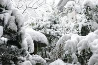 【初詣の旅】 富士山本宮浅間大社&白糸の滝 その4 - 季節(いま)を求めて