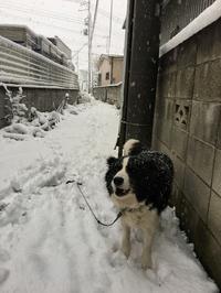 22日の東京の雪の中…… - 東京シンクパレット