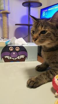 かわいいとき - 猫に目薬