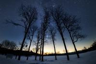 星空の下の雪原の木々 - Qualia