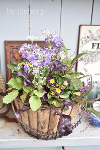 2月の寄せ植え教室は大人可愛いプリムラ♪ - 小さな庭 2