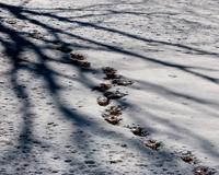 溶けかけの雪 など - 星の小父さまフォトつづり