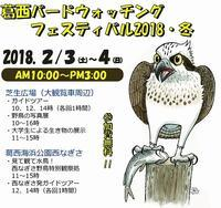 ★ 葛西バードウォッチング・フェスティバル2018・冬 - 葛西臨海公園・鳥類園Ⅱ