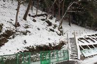 2018.01.27ユキワリイチゲ自生地と過去画像 - 安田の自然