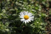 夢のある場所 - Poetry Garden 詩庭