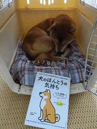 犬の本【犬のほんとうの気持ち】 - yamatoのひとりごと