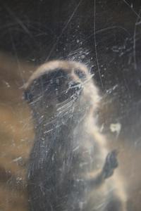 強い絆で結ばれた動物たち - 動物園のど!
