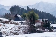 笹と雪 - toshi の ならはまほろば