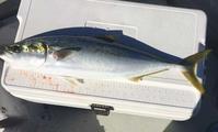 ジギング、タイラバ、それとエサ釣り - 9to5erアングラーのブログ