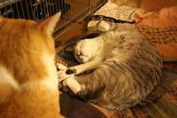 本質が寝姿に現れる - ぎんネコ☆はうす