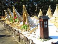 徳川園の冬牡丹・その2 - 花追い日記