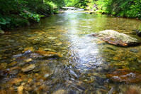 待ち遠しいですね・・「初夏新緑の季節」 - Nature World & Flyfishing