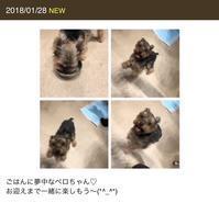 お泊り(2018年1月下旬)3日目 - ぺろ日記