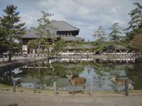 東大寺と鹿 - -風が唄った日-(カメラを持って)
