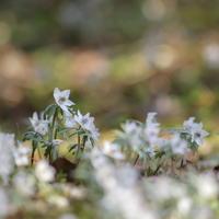 早春の便り - ecocoro日和