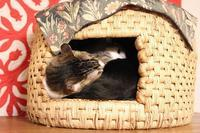 大好きな猫についていく猫 - きょうだい猫と仲良し暮らし