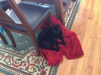 ネコ: 床の上 - にゃんこと暮らす・アメリカ・アパート(その2)