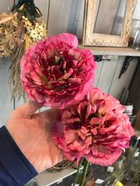 今日のステキ切花(o^^o) - ブレスガーデン Breath Garden 大阪・泉南のお花屋さんです。バルーンもはじめました。