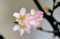 2021年の春を早く呼ぶ風水 - Miwaの優しく楽しく☆