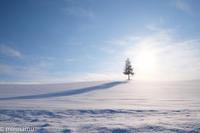 木のあるところ~1月の美瑛 - My favorite ~Diary 3~