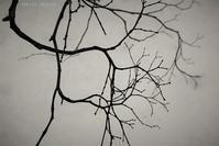 ニューロンのような - フォトな日々