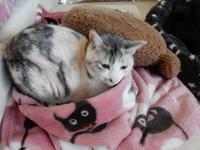 おさがり - 愛犬家の猫日記