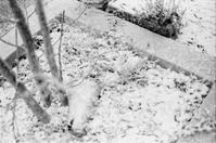 雪予報 - パトローネの中