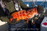 2018/01/30の釣果 - 鯛ラバ遊漁船  Miyazaki Offshore Boat Game Marine Frog 2