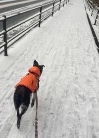 雪の中の散歩 - イマリちゃん プリンセスへの道