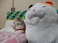大きな新人 - 愛犬家の猫日記
