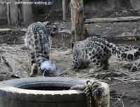 2017年12月 多摩動物公園 その4 オランX'mas会 - ハープの徒然草