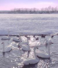 白鳥 - ルンコたんとワタシの心模様