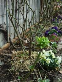 冬の庭仕事 - milfle なブーケ