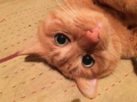 うちの巨顔猫 - もるとゆらじお