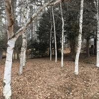 雪の午後 - 続 暮らしの中のアトリエ