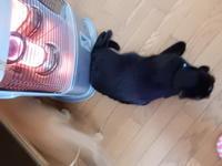 キレる寒さ - 愛犬家の猫日記
