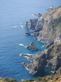 タンカン収穫と奄美大島で起きている事について。 - チルチルCafe&野遊び