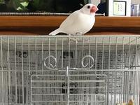 ぴーちゃんのお家 - つれづれ日記