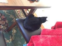 ネコ: 椅子の上 - にゃんこと暮らす・アメリカ・アパート(その2)