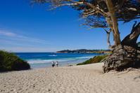 モントレー、カーメルへのミニ旅行/Our Weekend Visit to Monterey and Carmel - アメリカからニュージーランドへ