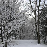 雪の週のマロン - 続 暮らしの中のアトリエ