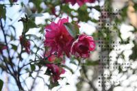 道しるべ - Poetry Garden 詩庭