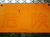 危険!クモの巣がありますよ - 空ヤ畑ノコトバカリ