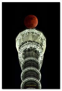 スーパー・ブルー・ブラッドムーン - toru photo box